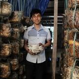 Cử nhân kinh tế bỏ phố về quê trồng nấm bào ngư