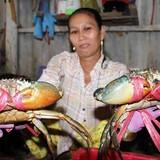 Trung Quốc giảm mua, cua biển Cà Mau lại rớt giá