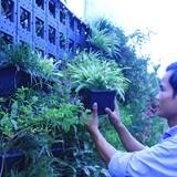 Tự tạo cơ hội: Phất lên với nghề làm vườn tường