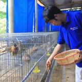 Tự tạo cơ hội: Kiếm tiền tỷ từ nuôi chim trĩ