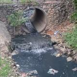 Tìm cách cứu những dòng sông đang hấp hối