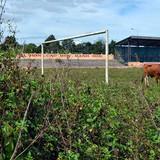 Sân vận động tiền tỷ dành để… thả bò