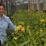 Tự tạo cơ hội: Lên núi trồng rau an toàn