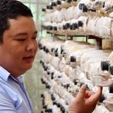 Kỹ sư điện kiếm tiền từ… trồng nấm