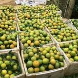 3 loại quả đặc sản vào vụ, giá dưới 50.000 đồng/kg