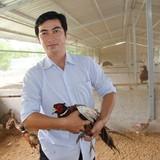Tự tạo cơ hội: Nuôi chim trĩ