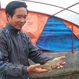 Bí quyết nuôi ếch cho ăn tỏi thu tiền tỷ