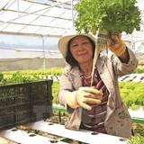 Thâm canh vốn Nhật cho nông nghiệp
