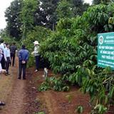 Làm gì để phát triển cà phê trước tác động của biến đổi khí hậu?