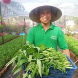 """""""Rẽ trái"""" sang làm nông: Về quê trồng rau sạch"""