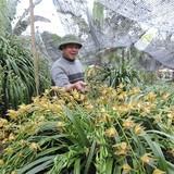 Địa lan Sapa có chậu giá gần trăm triệu đồng vẫn đắt khách