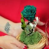 """Hoa hồng """"tươi mãi mãi"""" gần triệu đồng một bông"""