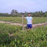 Thu tiền tỷ từ nghề ươm cây giống
