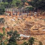 Rừng Sơn Trà ở Đà Nẵng bị đào xới làm khách sạn