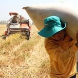 Vì sao cái nghèo cứ đeo bám nhà nông?