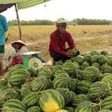 """Thị trường 24h: Vì sao nông sản cần được """"giải cứu""""?"""