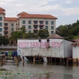 Hồ sen nổi tiếng gần Hồ Tây bị băm nát, có lấy lại được không?