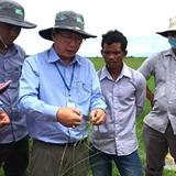 HAI: 6 tháng đầu năm đạt doanh thu 1,2 triệu USD tại thị trường Campuchia