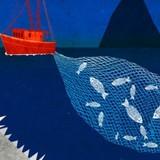 Vì sao ngư dân Trung Quốc cố tình đánh bắt cá trái phép trên Biển Đông?