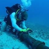 Công nghệ 24h: 3 tuyến cáp biển của Việt Nam đều gặp sự cố
