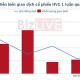 [Cổ phiếu nổi bật tuần] 'Sóng' HVG và khoản nợ ngắn hạn 12,3 nghìn tỷ đồng