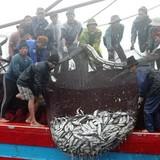Ngân hàng Nhà nước yêu cầu các ngân hàng TMCP khẩn trương hỗ trợ ngư dân