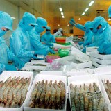 """<span class='bizdaily'>BizDAILY</span> : Gạo bị Trung Quốc """"chèn ép"""", thủy sản xuất khẩu giảm mạnh"""