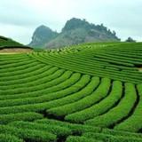 Thủ tướng yêu cầu thanh tra việc sử dụng đất tại các nông, lâm trường