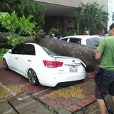 Mưa bão quật đổ 100 cây xanh, Hà Nội khuyên người dân hạn chế ra đường