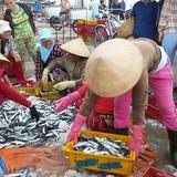 Chỉ có 1/18 mẫu cá biển miền Trung vượt ngưỡng an toàn về kim loại nặng