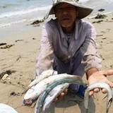 Formosa đã chuyển đủ 500 triệu USD bồi thường vụ cá chết