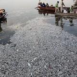 Chủ tịch Hà Nội: Sẽ sớm công khai nguyên nhân vụ cá chết ở Hồ Tây