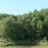 Chuyển đổi mục đích sử dụng 14ha đất rừng phòng hộ tại Ninh Bình