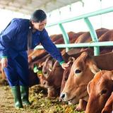 Doanh nghiệp 24h: Hoàng Anh Gia Lai bán bò cho ai?