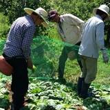 Xuất ngoại học... làm nông