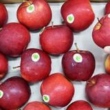 Người Việt ăn 3.000 tấn táo Pháp mỗi năm