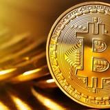 Bitcoin, một bong bóng hoa tulip mới?