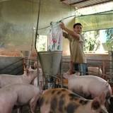 Trung Quốc nhập khẩu trở lại, giá thịt lợn đang tăng