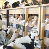 Bò, lợn, dê và trang trại trên nhà cao tầng ở thủ đô Tokyo