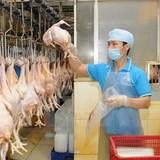 """""""Chứng thư""""đi toàn cầu cho ngành chăn nuôi"""