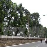 Chưa thể đánh chuyển cây xanh tại đường Kim Mã