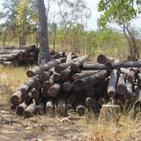 Thủ tướng yêu cầu Đắk Lắk kiểm điểm các vụ thác gỗ trái phép