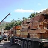 """Thị trường 24h: Doanh nghiệp gỗ """"chết đứng"""" vì phụ thuộc Trung Quốc"""
