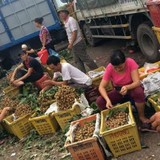 """Thị trường 24h: Nhãn lồng Hưng Yên tại Hà Nội là """"giả mạo"""""""