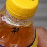 """Thị trường 24h: Tân Hiệp Phát lên tiếng về con ruồi """"tươi nguyên 3 tháng"""" trong chai nước"""