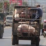 Thị trường 24h: Thương lái ồ ạt gom heo đi Trung Quốc