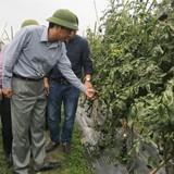 Hàng loạt ưu đãi cho doanh nghiệp đầu tư nông nghiệp tại Quảng Ninh