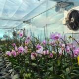 Những lý do thuyết phục doanh nghiệp đổ vốn vào nông nghiệp tỉnh Quảng Ninh
