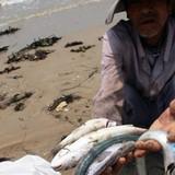 Hà Tĩnh lập Hội đồng đánh giá thiệt hại sau sự cố cá chết hàng loạt