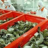 Thị trường 24h: Vì sao doanh nghiệp xuất khẩu tôm Việt gắn đinh vào đầu tôm xuất sang Nhật?